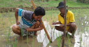 8,87 Hektare Sawah di Purwokencono Mendapatkan Sertifikasi Organik dari LSO